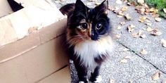 """This beautiful calico kitty has a pair of eyes as if she can see beyond limits.Meet Jasmine.  Courtesy of Sandra Coudray  Jasmine was found wandering the streets by rescuers. Soon they discovered that she was blind.  """"My mother saw a photo of Jasmine on Facebook from  Association Adoption Feline..."""