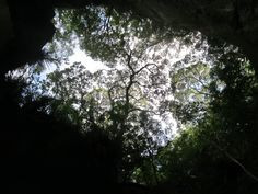 Looking up at the trees #NewZealand