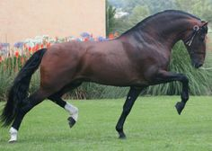 THAT is a powerful stallion!!