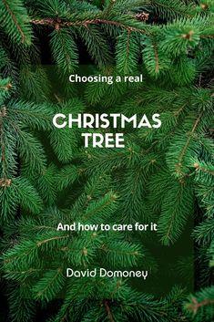 You searched for pine needles - David Domoney Real Christmas Tree, Pine Needles, David, Inspiration, Biblical Inspiration, Inhalation, Motivation
