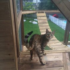 The benefits of a catio or enclosed deck are that you help prevent your feline from coming into contact with other animals that might be carrying communicable diseases, or that might provoke or attack. Diy Cat Enclosure, Outdoor Cat Enclosure, Reptile Enclosure, Diy Pour Chien, Cat Habitat, Outdoor Cats, Outdoor Spaces, Outdoor Living, Cat Run