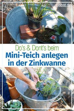 Create mini rain- Miniteich anlegen How to create a water garden for the balcony: We show you step by step how to create a mini-pond and optimally plant the zinc tub. Water Garden, Garden Pots, Balcony Gardening, Rain Garden, Mini Pond, Potager Bio, Comment Planter, Lawn Edging, Patio Plants