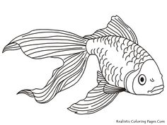 Coloring pages tropical fish - Coloring Pages & Pictures - IMAGIXS