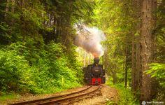 """Old wood transport train in Romania, """"Mocanita"""" - Maramures"""