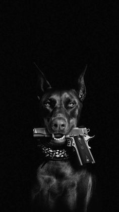 Dog With Gun IPhone Wallpaper - IPhone Wallpapers