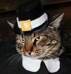 Pilgrim Cat is Thankful
