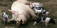 #Animais: Os 5 animais mais inteligentes do planeta ↪ Por @jpcppinheiro. Se o ser humano é o animal mais inteligente que há, pergunto: quais são os cinco próximos dessa lista? Trouxemos a resposta para você. Veja só! http://www.curiosocia.com/2015/06/os-5-animais-mais-inteligentes-do.html