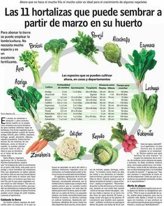 Organic, Artichoke, Vegetables Garden, Potted Plants, Vegetable Garden, Vegetable Recipes, Container Plants