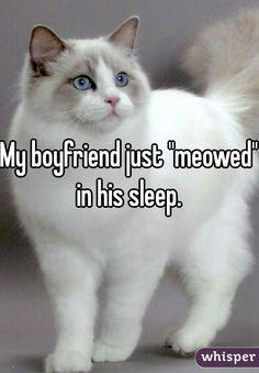 """""""My boyfriend just """"meowed"""" in his sleep. """""""