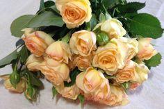 Citrine Gem Spray Roses