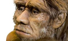 The downside of sex with Neanderthals.  Some modern humans carry immune genes that originated in Neanderthals and a related species. But these genes may have come at a price.