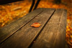 Park In The Fall Wallpaper WallDevil Beach Wallpaper, Fall Wallpaper, Photo Wallpaper, Beautiful Photos Of Nature, Fall Background, Fall Is Here, Hd Desktop, Fall Season, Outdoor Furniture