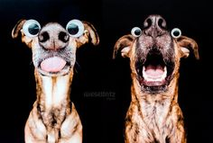 Elke Vogelsang, the pet photographer we wrote about a while ago, is back with more fun and lively portraits of adorable dogs, including her 3 pups – Noodles, Scout and Loli. These 3 photo models have wonderful, playful natures that Vogelsang communicates perfectly in her expressive portraits.