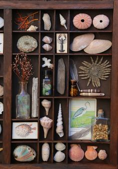 Seashell Crafts, Beach Crafts, Seashell Art, Diy Crafts, Shell Collection, Nature Collection, Collections Of Objects, Displaying Collections, Shadow Box Art
