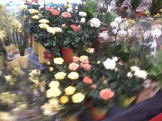 Kukkavalikoimaa Kaupassa