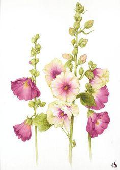 Акварелевый гербарий от Jan Harbon