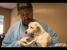 """""""These animals can be helped.  And we will try our best to help all of them."""" - Adopt from shelters or rescues."""