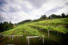 compra-vino.com Blog: Un mar de vinos, la historia de un albariño