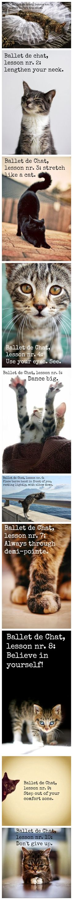 Ballet de Chat. Lessons for students from cute kittens! ♥ Wonderful! www.thewonderfulworldofdance.com