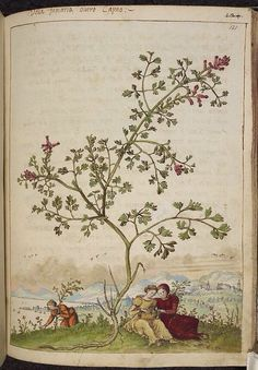 Fumaria, from De Materia Medica, a work on herbal medicine by Pedanius Dioscorides, 16th century edition. It depicts a wide range of plants against a backdrop of landscapes, often featuring populated scenes. Watercolour