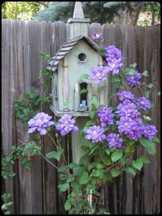 Pretty Purple Clematis and Rustic Birdhouse