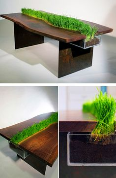 a wooden desk with some grass growing in it