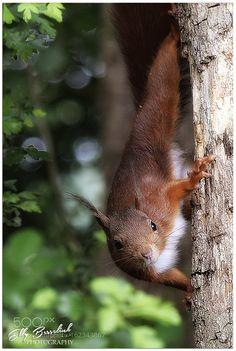 like an acrobat by ellybes1 #animals #animal #pet #pets #animales #animallovers #photooftheday #amazing #picoftheday