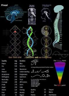 The Pineal Gland or 3rd eye, Chakras and Kundalini are all elements of the Frequencies that work in Harmony with the Human Body.