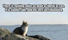 TOP 51 FUNNY CAT MEME