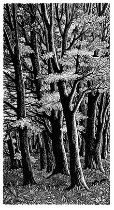 Sue Scullard. Tall trees. (wood engraving)