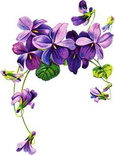 Free vintage Violet graphics