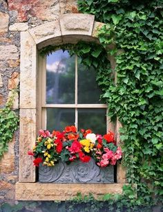 window box...love this window with English ivy