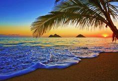 Last Sunrays - sun, palm, water, waves, sky, summer, sea