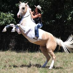 Rear Bareback and Bridleless A Burton on Banjo. I wanna be like her! Cowgirl And Horse, Horse Love, Horse Girl, Horse Photos, Horse Pictures, Pretty Horses, Beautiful Horses, Cheval Pie, Bareback Riding