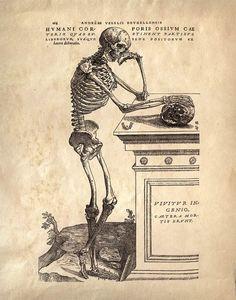 Vintage Anatomy Print, Leaning Skeleton