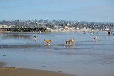 ocean beach dog beach San Diego. This is one of my favorite vacation spots ever.