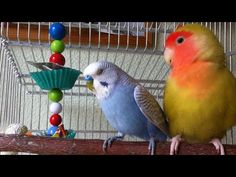 Do it yourself: your own foraging toys for parrots, budgies, lovebirds, cockatiels or any other bird. Cockatiel, Budgies, Parrots, Diy Bird Toys, Diy Toys, Pretty Birds, Love Birds, Budgie Toys, Conure