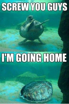 Funny Pictures of The Day | http://funnypictures247.com