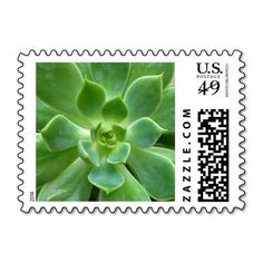 These #green #succulent #plant #postage #stamps brighten up any correspondence, but they're especially pretty when used to send #wedding, #bridal #shower, engagement #party, vow renewal, or anniversary #invitations, #announcements, save the dates, RSVPs, and thank you notes. Available in horizontal or vertical design format and fully customizable / personalizable (simply add your own names, dates, and/or phrase when ordering). #stamp #floral #foliage #postal