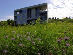 purple flowers are wild bee balm, or monarda