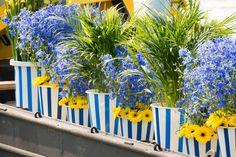 Blue flowers #varendcorso #event #westland #holland #visitholland #august