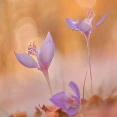 Autumn wild flower 15 - null