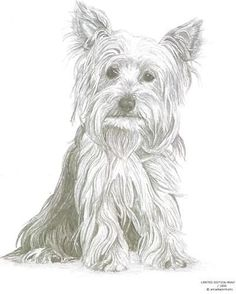 YORKSHIRE TERRIER (1) Yorkie dog Limited Edition pencil drawing art print