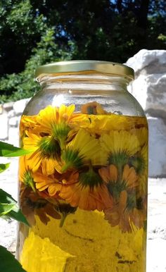 Φέτος στους κήπους του Πελίτι έχουμε βάλει αρκετές καλέντουλες. Οι καλέντουλες είναι από τα πιο γνωστά φυτά που χρησιμοποιούνται στην... Mason Jars, Mason Jar, Glass Jars, Jars
