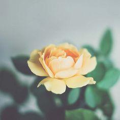 """""""Memory believes before knowing remembers. Believes longer than recollects, longer than knowing even wonders."""""""