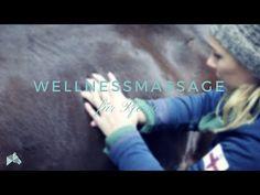 Pferd massieren: Die besten Tipps und Griffe zur Pferdemassage! Round Pen, Massage, Natural Horsemanship, All About Horses, Magic Words, Horse Training, Equestrian, Exercise, Concert
