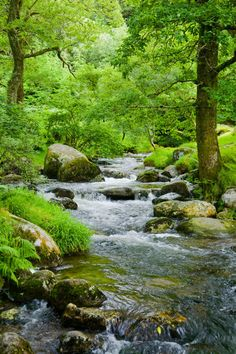 """Small stream in a forest with oak trees"" Photography by kbhsphoto posters, art prints, canvas prints, greeting cards or gallery prints. Find more Photography art prints and posters in the ARTFLAKE. Beautiful Nature Wallpaper, Beautiful Landscapes, Tree Photography, Landscape Photography, Landscape Art, Landscape Paintings, Beautiful World, Beautiful Places, Nature Scenes"