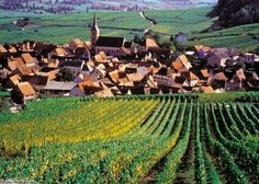 Blienschwiller Wine Fair on the Route du Vin in Alsace, France welcomes you.