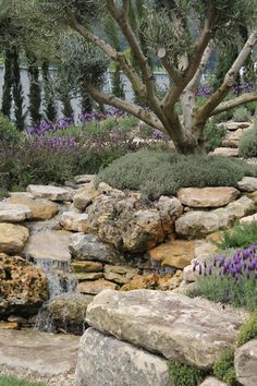 Olive Garden Design and Landscaping . Luxury Olive Garden Design and Landscaping . Mediterranean Landscaping Olive Trees Lavender and Mediterranean Garden Design, Olive Garden, Xeriscaping, Water Features In The Garden, Olive Tree, Garden Trees, Water Garden, Dream Garden, Garden Inspiration