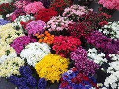 Flowers /  İstanbul